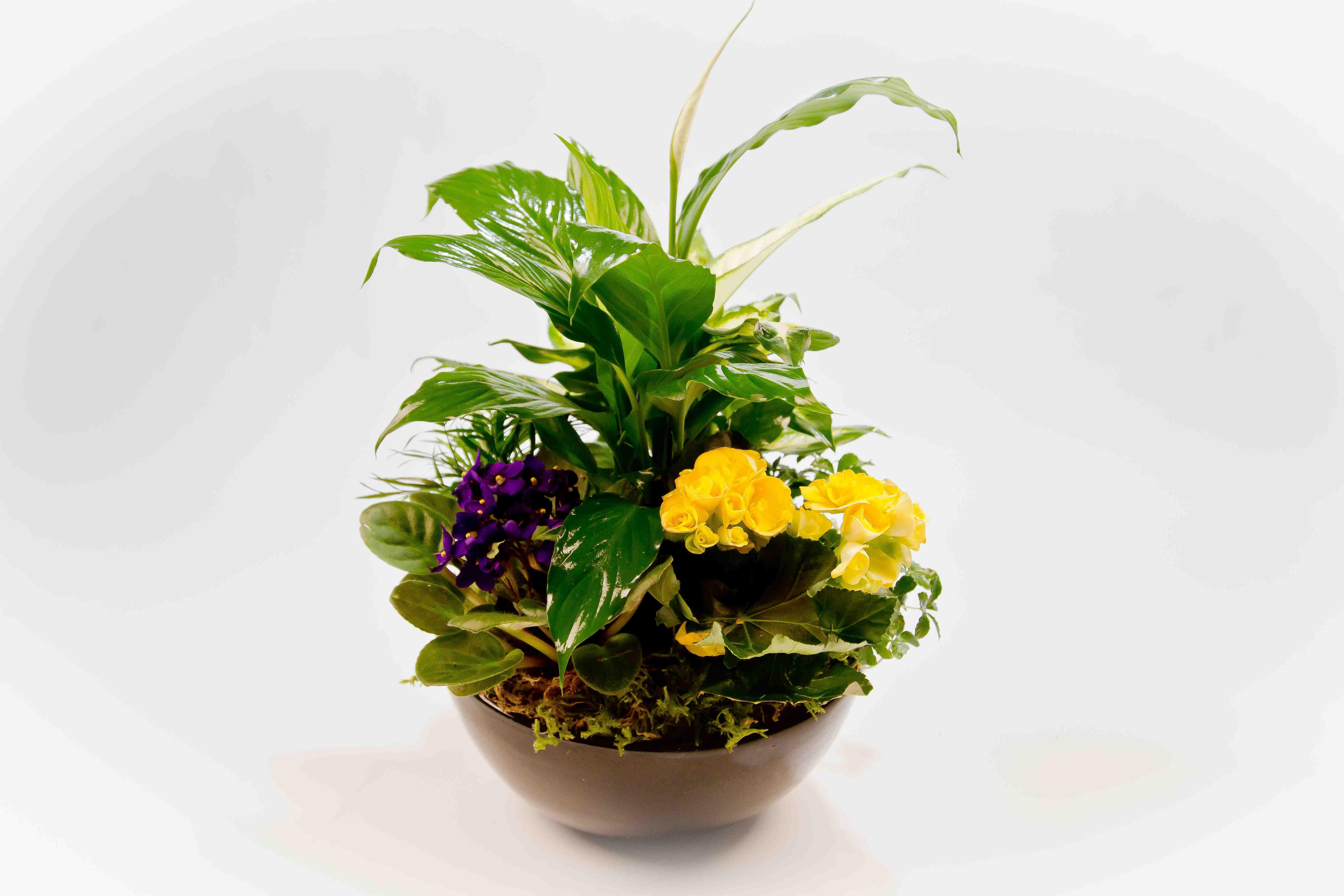 Flower Arrangements Gift Baskets : Arrangement jacobsen s flowers gift baskets
